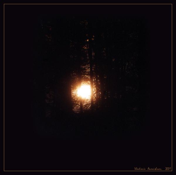"""фото """"В ночном лесу"""" метки: пейзаж, лес, ночь"""