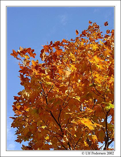 "фото ""Autumn"" метки: пейзаж, природа, осень"