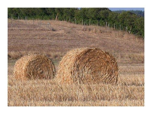 """фото """"""""straw"""""""" метки: пейзаж, природа,"""
