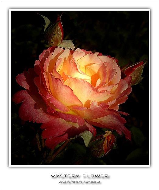 """фото """"Mystery-2"""" метки: природа, макро и крупный план, цветы"""