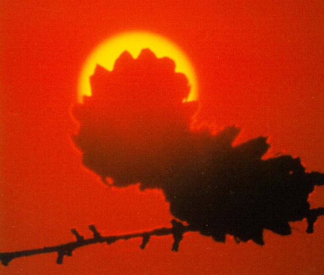 """фото """"Солнечное затмение"""" метки: юмор, пейзаж,"""