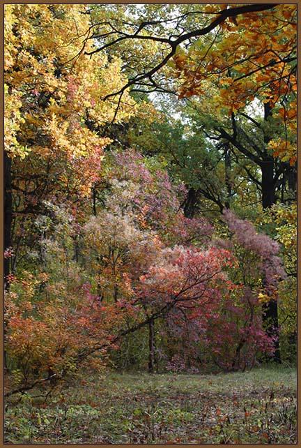 """фото """"Облачный день"""" метки: пейзаж, природа, лес, цветы"""