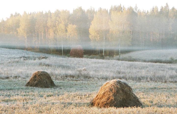 """фото """"``3 elements`` from series Fall"""" метки: пейзаж, осень"""