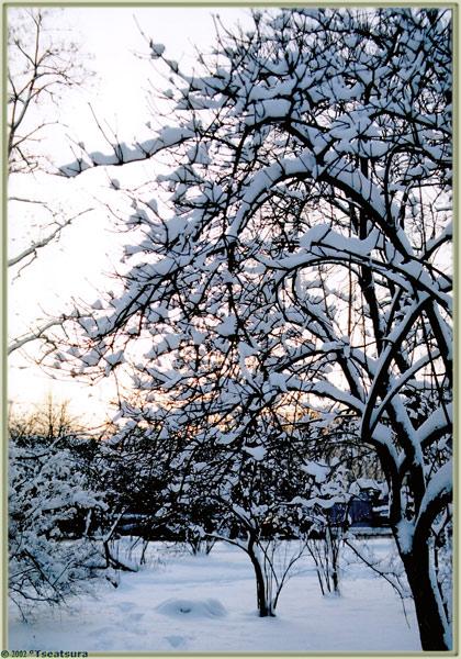 """фото """"Cool Sunset"""" метки: пейзаж, закат, зима"""
