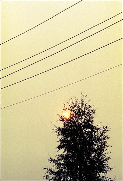"""фото """"И солнце, запутавшись в кроне уснуло.."""" метки: разное,"""