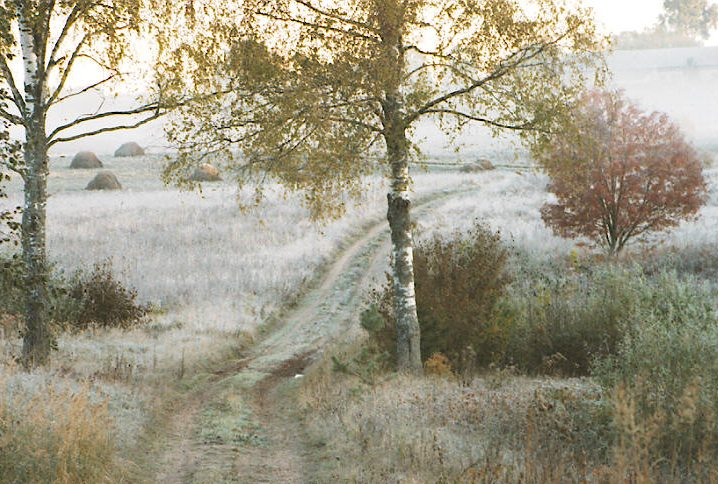 """фото """"``Frosty morning`` From series Fall"""" метки: пейзаж, осень"""