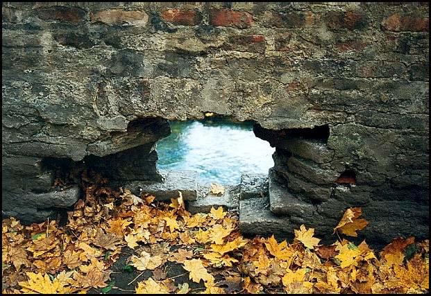 "фото ""Взгляд сквозь стену"" метки: природа,"