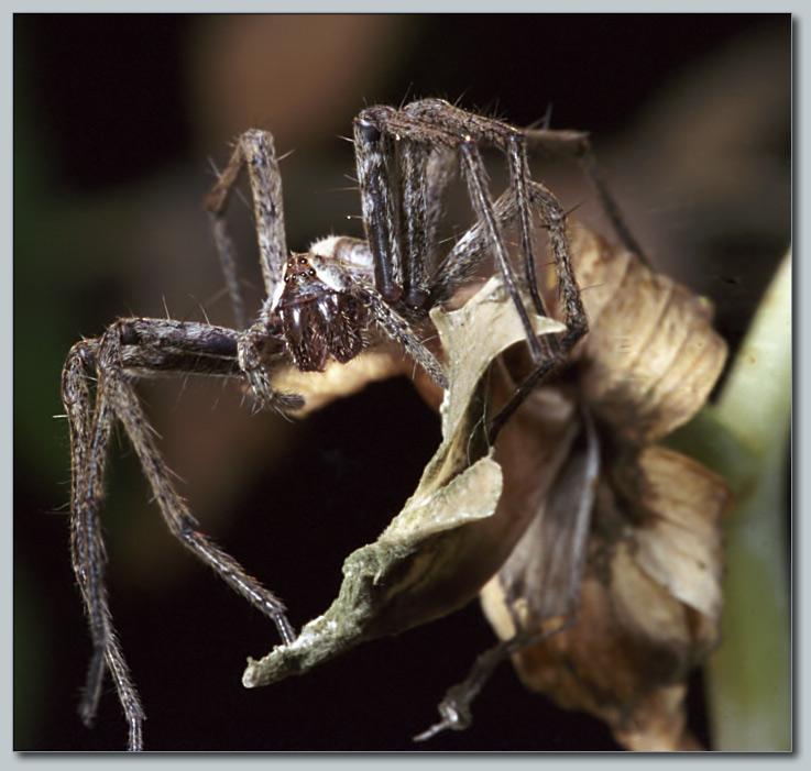 """фото """"Чудовище"""" метки: макро и крупный план, природа, насекомое"""