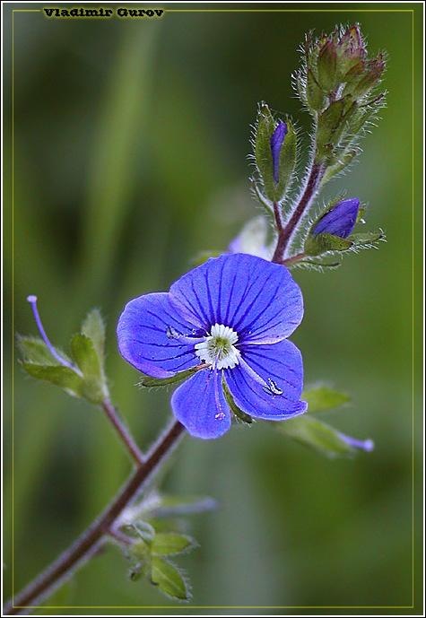 """фото """"Всего доброго!"""" метки: природа, макро и крупный план, цветы"""