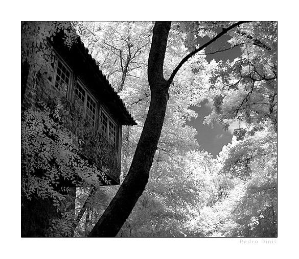 """фото """"Hidding place"""" метки: пейзаж, черно-белые, лето"""