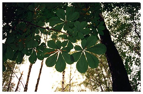 """фото """"Когда деревья были большими..."""" метки: природа, цветы"""