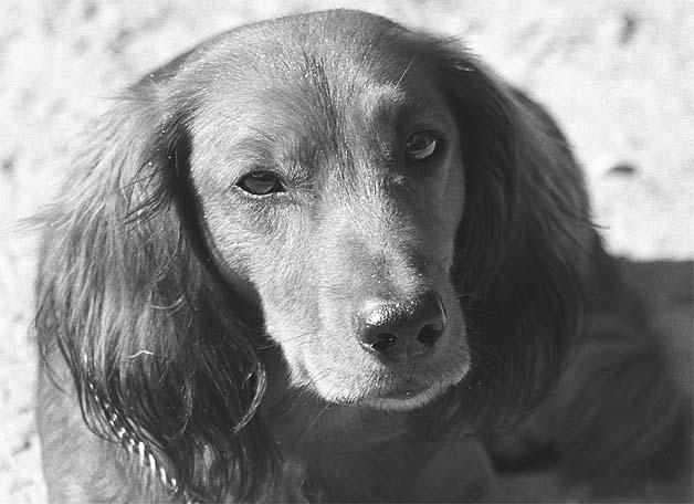 """фото """"Чип"""" метки: природа, портрет, домашние животные"""