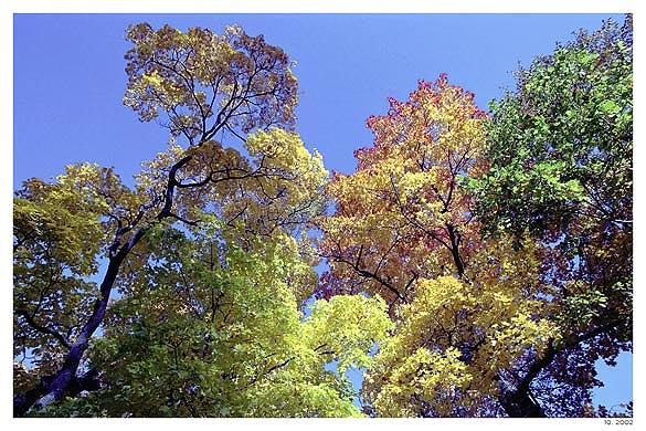 """фото """"Буйство осенних красок."""" метки: пейзаж, осень"""