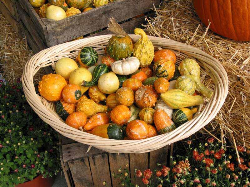 "фото ""Autumn Harvest"" метки: натюрморт, пейзаж, осень"