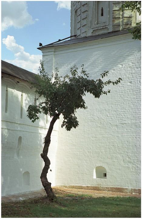 """фото """"Бонсай в тени монастырской стены"""" метки: архитектура, пейзаж,"""