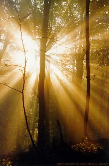 """фото """"Из серии """"Плагиат""""  №12, последняя."""" метки: пейзаж, закат, лес"""