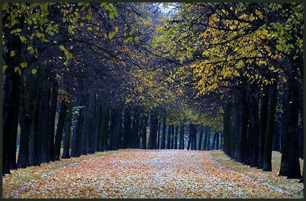 """фото """"Бульвар."""" метки: пейзаж, лес, осень"""