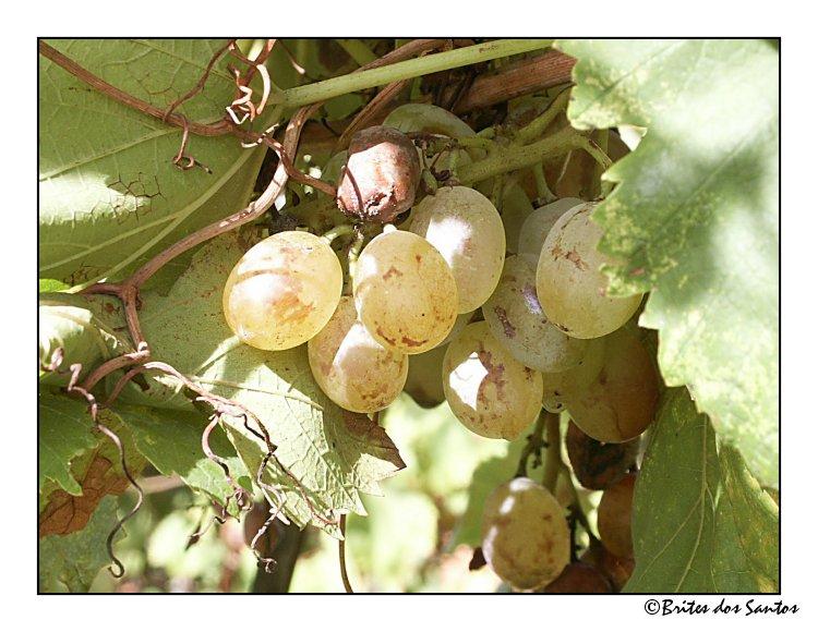 """фото """"Edible Fruit"""" метки: природа, цветы"""
