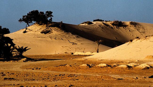 """фото """"Dunes 4"""" метки: пейзаж, путешествия, Африка"""
