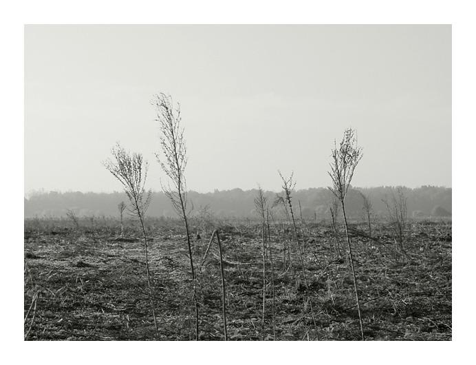 "фото ""weeds"" метки: природа,"