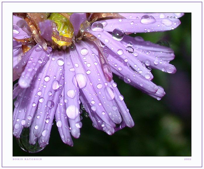 """фото """"Бриллианты дождя"""" метки: природа, макро и крупный план, цветы"""
