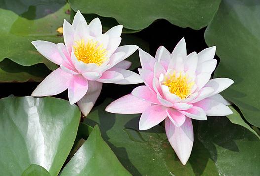 """фото """"Delicate"""" метки: природа, цветы"""