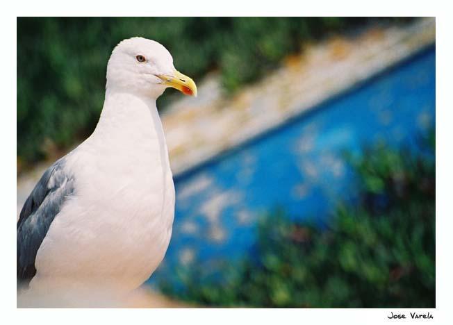 "фото ""Seagull"" метки: природа,"