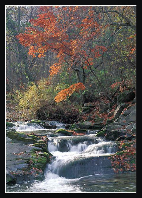 """фото """"Осень в Приморье"""" метки: пейзаж, вода, осень"""