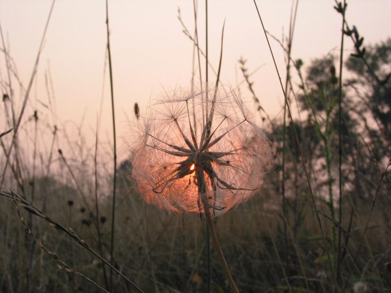"""фото """"Печаль моя светла ..."""" метки: макро и крупный план, пейзаж, закат"""