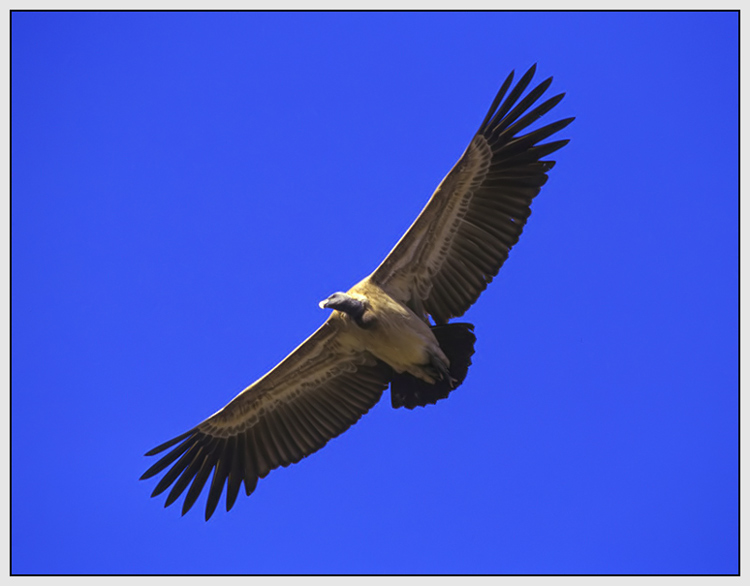 """фото """"Patrol Flight"""" метки: природа, дикие животные"""