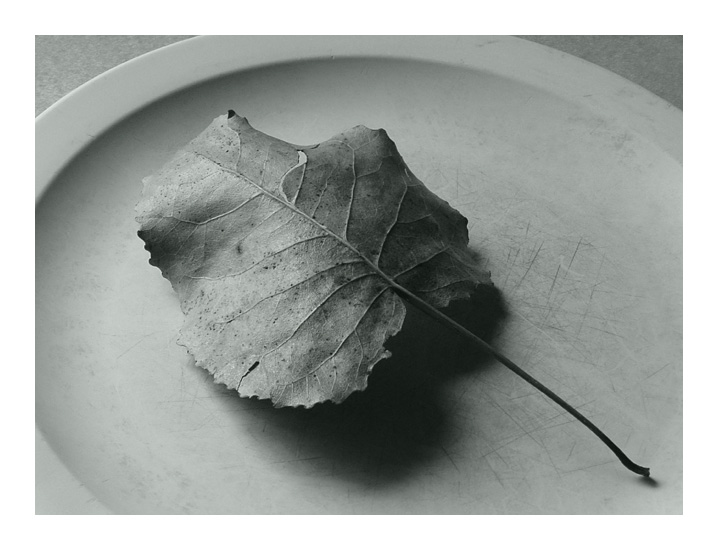 "фото ""leaf on plate"" метки: натюрморт,"