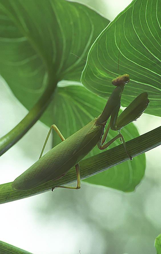 """фото """"Помолемся перед трапезой ..."""" метки: макро и крупный план, природа, насекомое"""