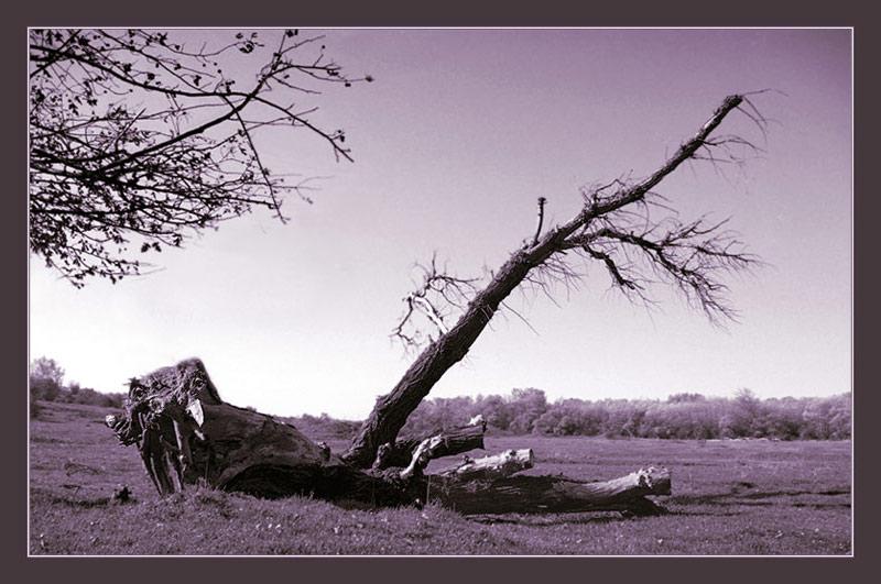 """фото """"Тварь"""" метки: пейзаж, природа, лес"""