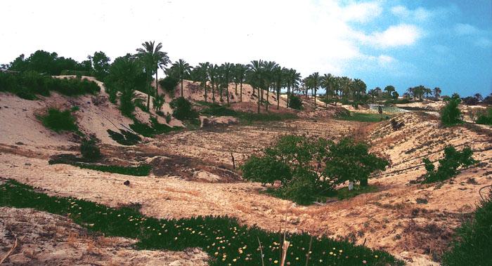 """фото """"North Sinai"""" метки: пейзаж, путешествия, Африка"""