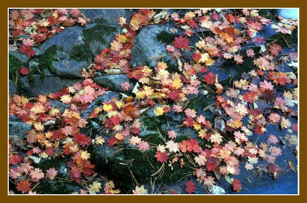 """фото """"Краски осени"""" метки: пейзаж, осень"""