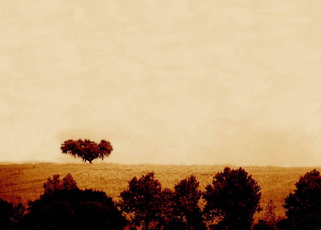 "фото ""Alone here."" метки: пейзаж, природа, цветы"