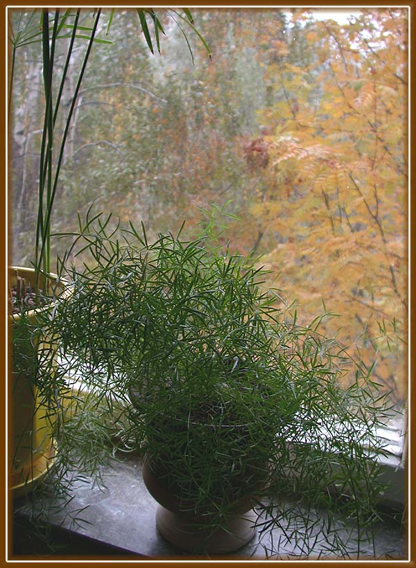 """фото """"Дома всё ещё лето."""" метки: пейзаж, природа, осень, цветы"""