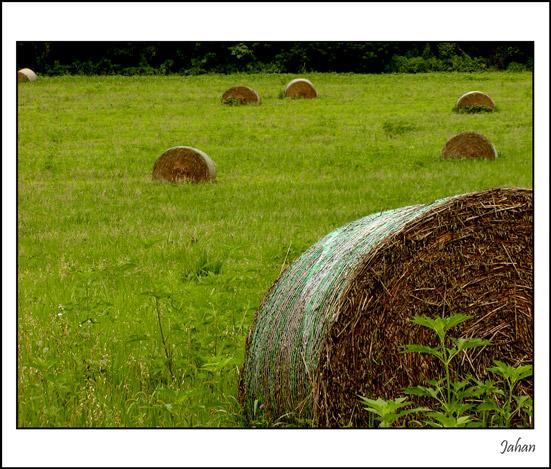 "фото ""Rolls Of Summer"" метки: пейзаж, природа, лето"