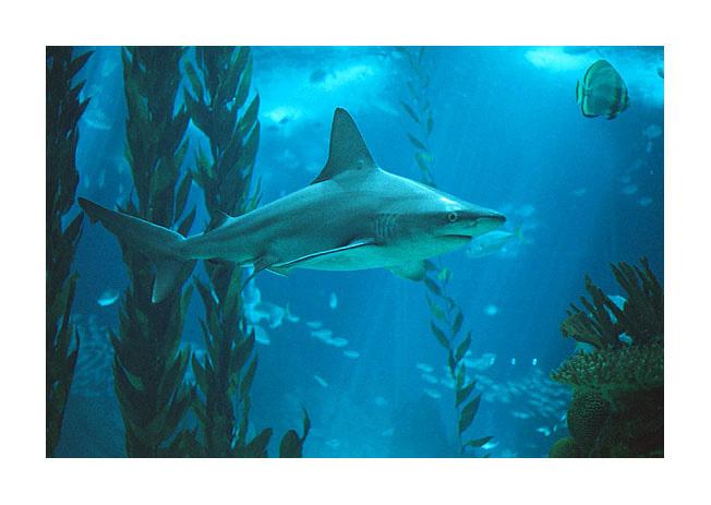 """фото """"Big fish"""" метки: природа, дикие животные"""