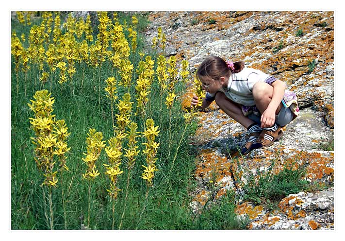 """фото """"Берег цветочного моря"""" метки: природа, портрет,"""
