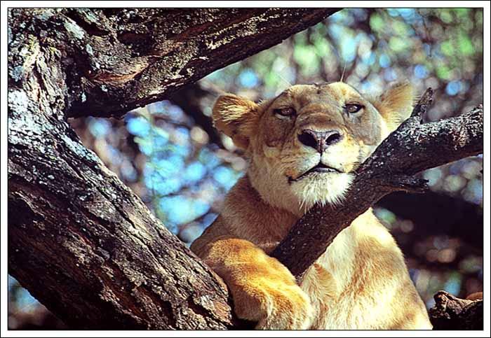 """фото """"Любопытство..."""" метки: природа, путешествия, Африка, дикие животные"""