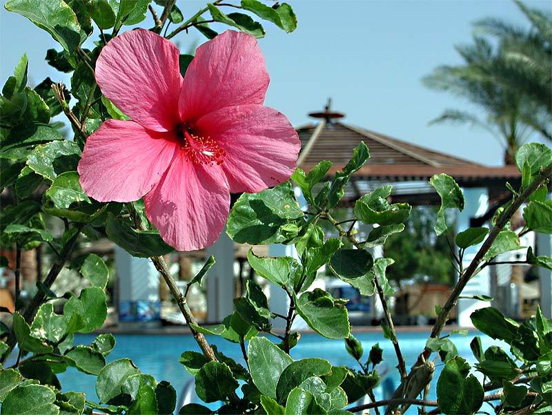 """фото """"Розовый цвет..."""" метки: путешествия, макро и крупный план, Африка"""