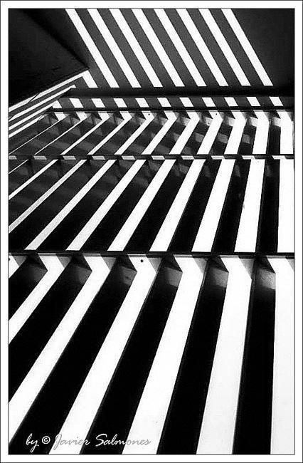 """фото """"""""Zebra"""""""" метки: абстракция,"""