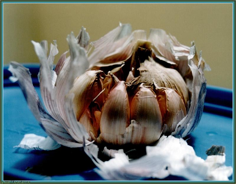 """фото """"Garlic Flower"""" метки: макро и крупный план, абстракция,"""