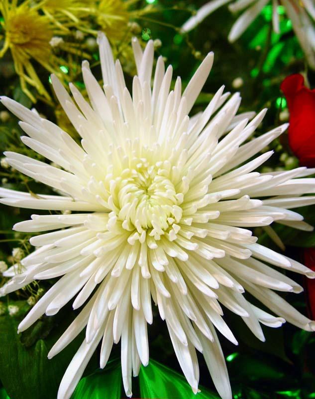 """фото """"Нежность 3"""" метки: макро и крупный план, природа, цветы"""