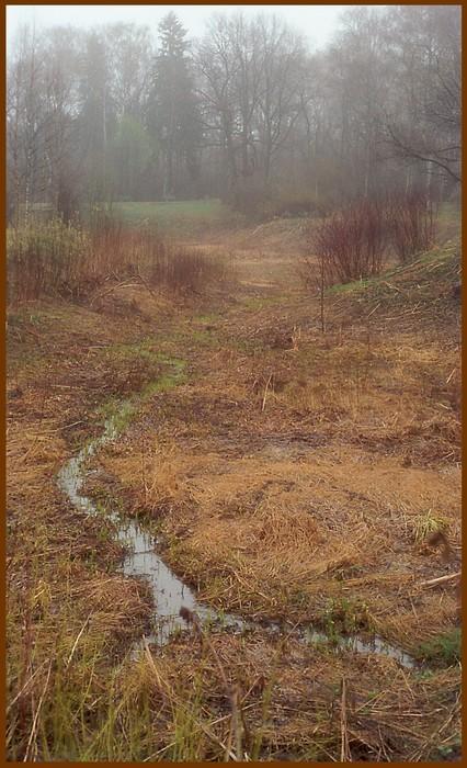 """фото """"Межсезонье - прощание с осенью"""" метки: пейзаж, лес"""