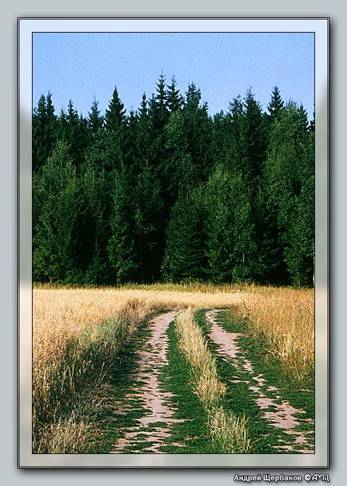 """фото """"Среднерусский пейзаж"""" метки: пейзаж, лес, лето"""