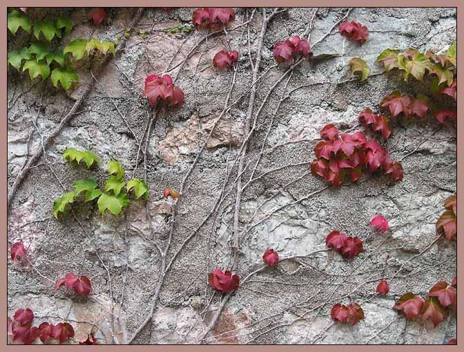"""фото """"Живое и неживое"""" метки: природа, разное, цветы"""