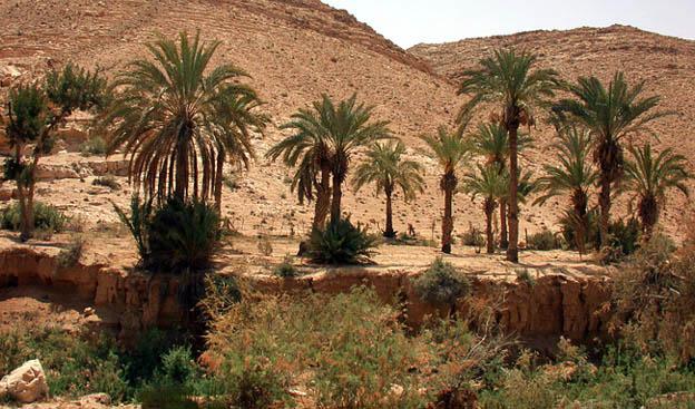 """фото """"North Sinai 2"""" метки: пейзаж, путешествия, Африка"""