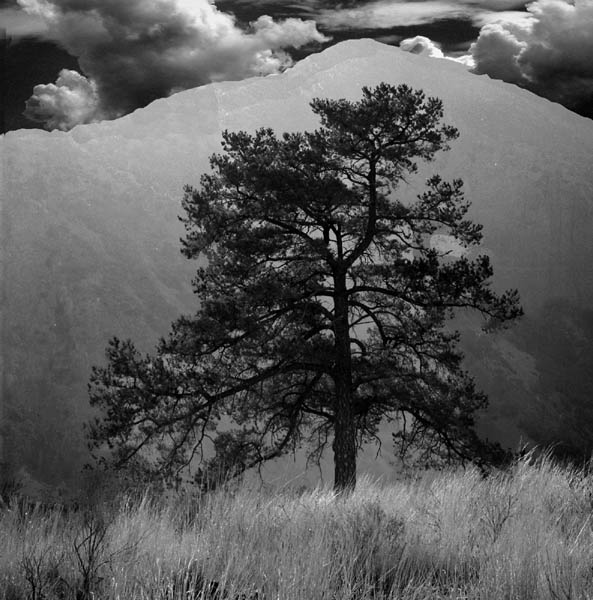 "фото ""Solitary Tree"" метки: пейзаж, горы, зима"